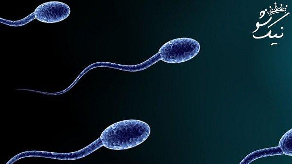 اسپرم در هوای آزاد چه مدت زمانی زنده می ماند؟