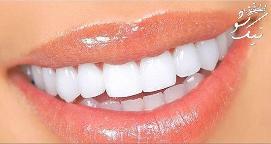 رشد مجدد دندان ها در آستانه محقق شدن