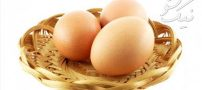 تعبیر خواب تخم مرغ | تخم مرغ خانگی | خواب نیمرو
