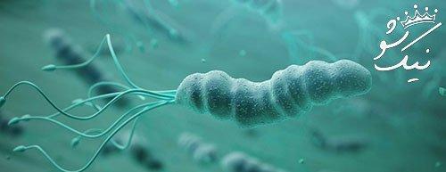 هلیوباکترپیلوری یا میکروب معده چیست؟ چطور درمان می شود؟