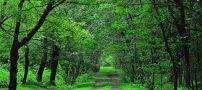 جنگل های هیرکانی | آدرس ، عکس و راهنمای سفر
