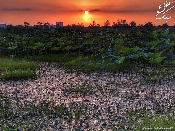 راهنمای سفر به لاکان | دریاچه سقالکسار | تالاب تخسم