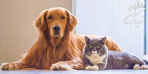 8 نکته مهم برای کسانی که حیوان خانگی دارند