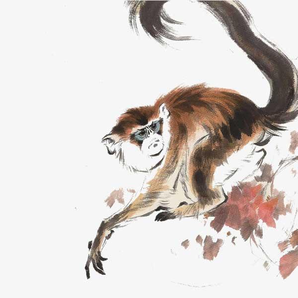 طالع بینی چینی متولدین سال میمون