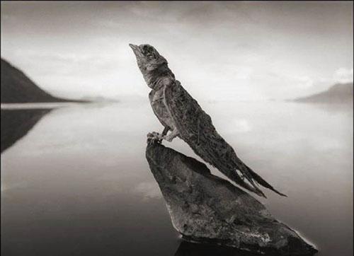 دریاچه عجیب که حیوانات را به سنگ تبدیل می کند!