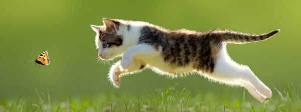 طالع بینی چینی متولدین سال گربه