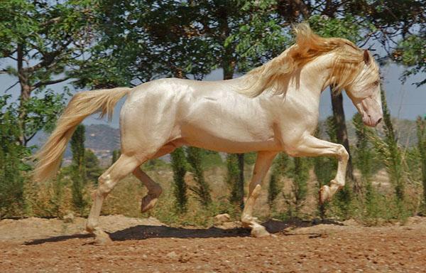 اسب در فال قهوه به چه معناست؟ تعبیر اسب در فال قهوه