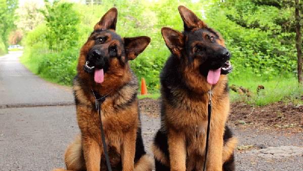 سگ در فال قهوه به چه معناست؟ تعبیر سگ
