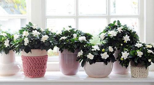با این گیاهان آرامش را به خانه تان بیاورید