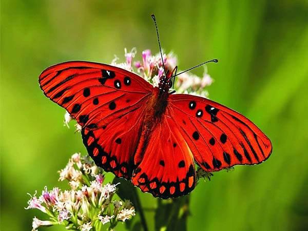پروانه در فال قهوه به چه معناست؟ تعبیر پروانه