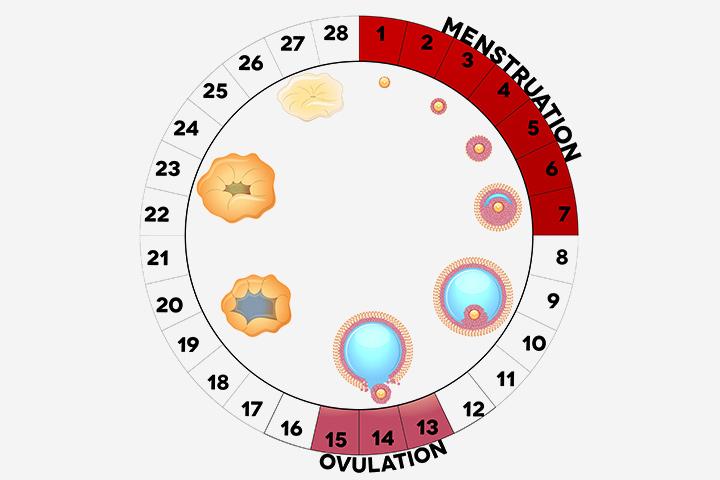 چطور زمان تخمک گذاری را تشخیص دهیم؟