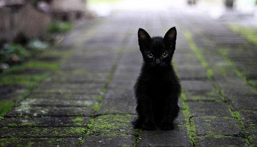 تعبیر خواب گربه ، گربه سفید ،سیاه ،طوسی در خانه