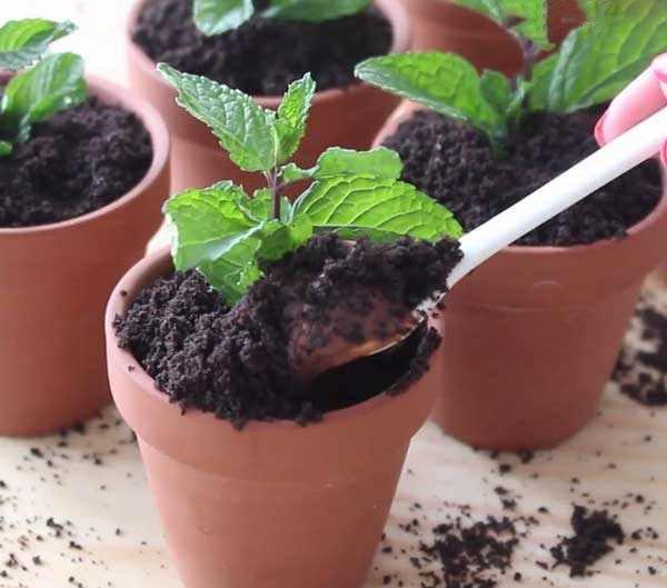 از بین بردن پشه های ریز گلدان